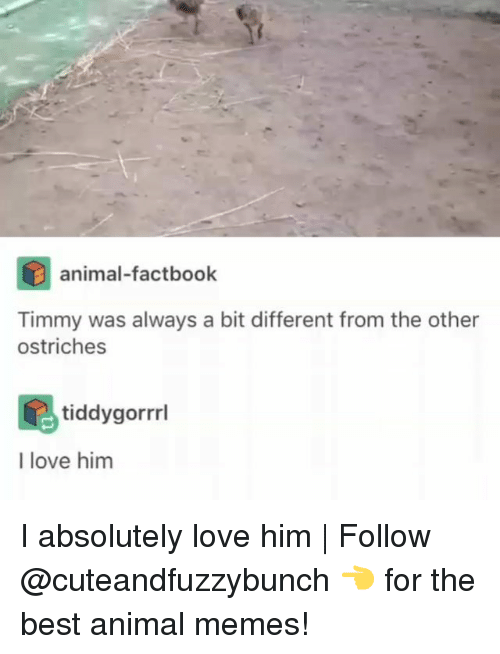 Best Animal Memes: animal-factbook  Timmy was always a bit different from the other  ostriches  tiddygorrl  I love him I absolutely love him | Follow @cuteandfuzzybunch 👈 for the best animal memes!