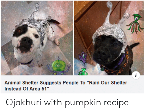 "Animal, Animal Shelter, and Pumpkin: Animal Shelter Suggests People To ""Raid Our Shelter  Instead Of Area 51"" Ojakhuri with pumpkin recipe"
