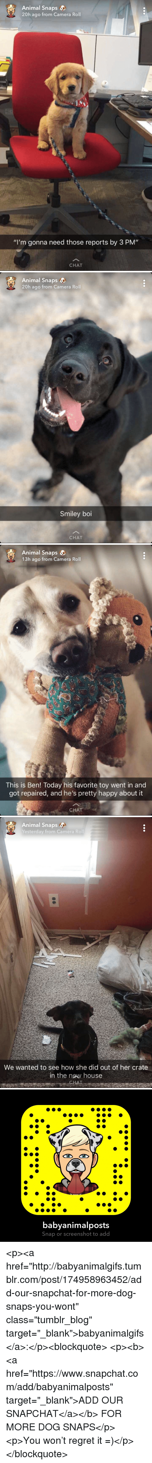 """Regret, Snapchat, and Target: Animal Snaps  20h ago from Camera Roll  """"I'm gonna need those reports by 3 PM""""  CHAT   Animal Snaps  20h ago from Camera Roll  Smiley boi  CHAT   Animal Snaps  13h ago from Camera Roll  This is Ben! Today his favorite toy went in and  got repaired, and he's pretty happy about it  CHAT   Animal Snaps  Yesterday from Camera Roll  We wanted to see how she did out of her crate  in the new house  AT   babyanimalposts  Snap or screenshot to add <p><a href=""""http://babyanimalgifs.tumblr.com/post/174958963452/add-our-snapchat-for-more-dog-snaps-you-wont"""" class=""""tumblr_blog"""" target=""""_blank"""">babyanimalgifs</a>:</p><blockquote> <p><b><a href=""""https://www.snapchat.com/add/babyanimalposts"""" target=""""_blank"""">ADD OUR SNAPCHAT</a></b> FOR MORE DOG SNAPS</p> <p>You won't regret it =)</p> </blockquote>"""