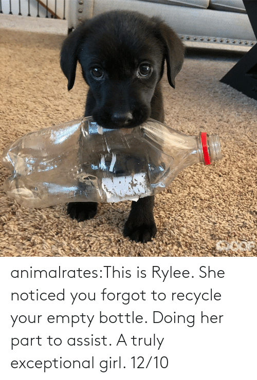empty: animalrates:This is Rylee. She noticed you forgot to recycle your empty bottle. Doing her part to assist. A truly exceptional girl. 12/10