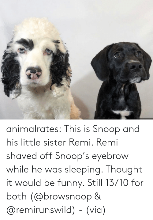 Would Be: animalrates:  This is Snoop and his little sister Remi. Remi shaved off Snoop's eyebrow while he was sleeping. Thought it would be funny. Still 13/10 for both‬ (@browsnoop & @remirunswild) - (via)