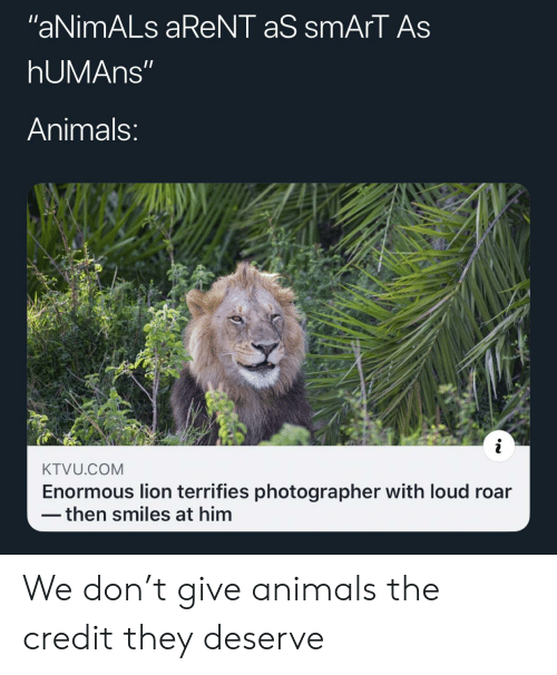 "Animals, Lion, and Smiles: ""aNimALs aReNT aS smArT As  hUMAns""  Animals:  KTVU.COM  Enormous lion terrifies photographer with loud roar  then smiles at him We don't give animals the credit they deserve"