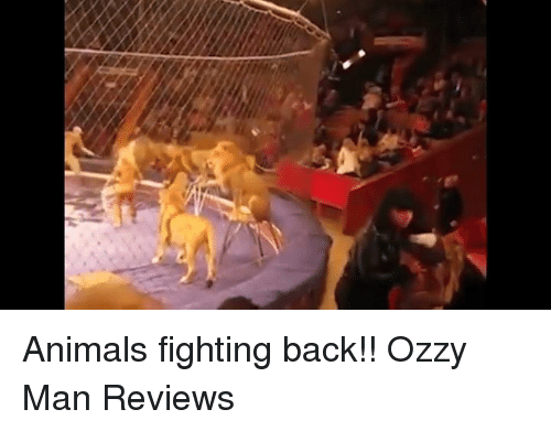Ozzies: Animals fighting back!!  Ozzy Man Reviews