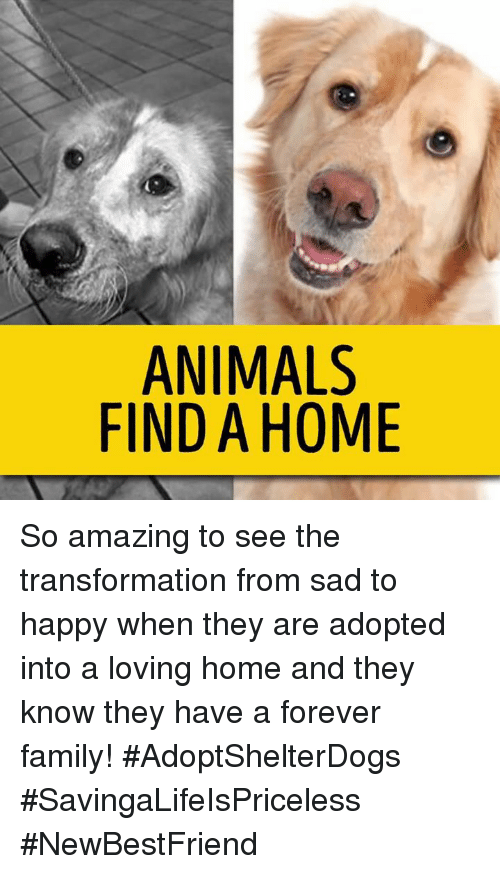 Amaz: ANIMALS  FIND A HOME So amazing to see the transformation from sad to happy when they are adopted into a loving home and they know they have a forever family! #AdoptShelterDogs #SavingaLifeIsPriceless #NewBestFriend