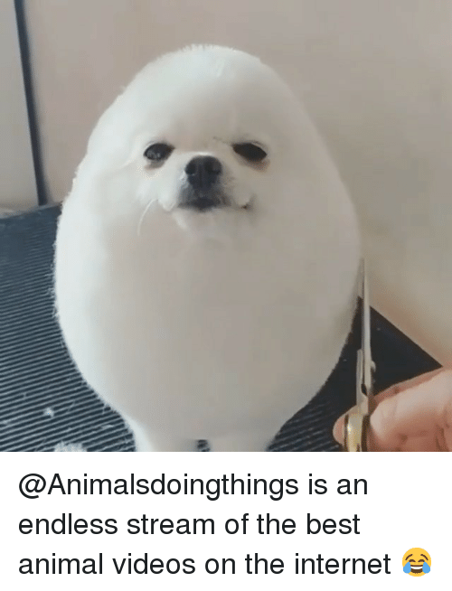 best animal: @Animalsdoingthings is an endless stream of the best animal videos on the internet 😂