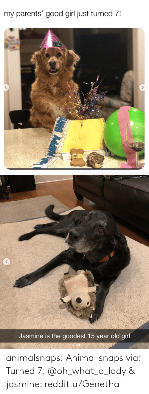 lady: animalsnaps: Animal snaps via: Turned 7: @oh_what_a_lady & jasmine: reddit u/Genetha