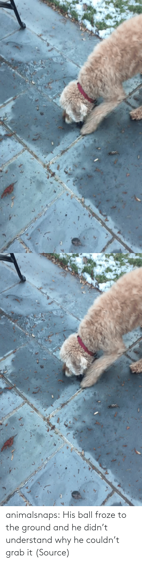 understand: animalsnaps:  His ball froze to the ground and he didn't understand why he couldn't grab it (Source)
