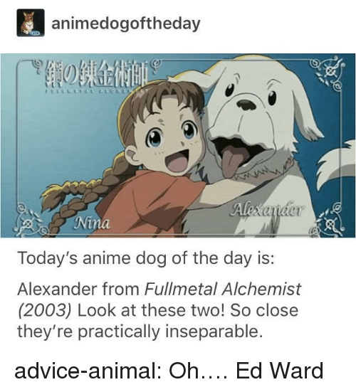 Advice, Anime, and Tumblr: animedogoftheday  Today's anime dog of the day is:  Alexander from Fullmetal Alchemist  (2003) Look at these two! So close  they're practically inseparable. advice-animal:  Oh….  Ed Ward