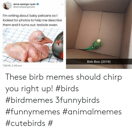 Anna, Memes, and Birds: anna spargo-ryan  @annaspargoryan  I'm writing about baby pelicans sol  looked for photos to help me describe  them and it turns out: testicle swan.  Birb Box (2019)  wwswhwsss  7/8/18, 2:49 pm These birb memes should chirp you right up! #birds #birdmemes 3funnybirds #funnymemes #animalmemes #cutebirds #