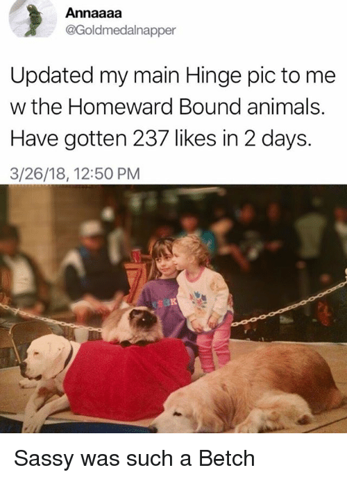 Animals, Girl Memes, and Sassy: Annaaaa  Goldmedalnapper  Updated my main Hinge pic to me  w the Homeward Bound animals.  Have gotten 237 likes in 2 days.  3/26/18, 12:50 PM Sassy was such a Betch