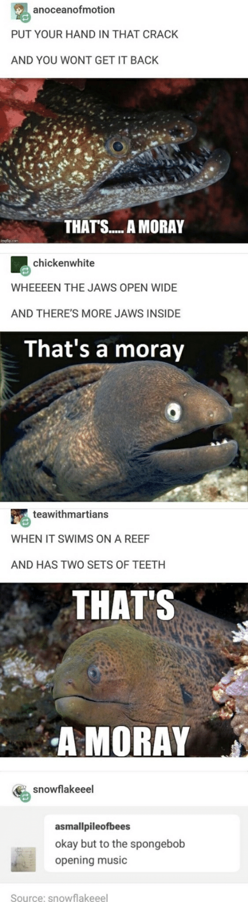 Music, SpongeBob, and Okay: anoceanofmotion  PUT YOUR HAND IN THAT CRACK  AND YOU WONT GET IT BACK  THATS.... A MORAY  chickenwhite  WHEEEEN THE JAWS OPEN WIDE  AND THERE'S MORE JAWS INSIDE  That's a moray  teawithmartians  WHEN IT SWIMS ON A REEF  AND HAS TWO SETS OF TEETH  THAT'S  A MORAY  snowflakeeel  asmallpileofbees  okay but to the spongebob  opening music  Source: snowflakeeel