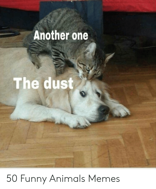 Animals Memes: Another one  The dust 50 Funny Animals Memes
