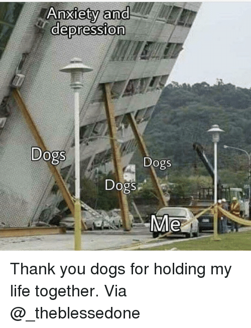 Dogs, Life, and Memes: Anxlety ana  depression  0  Dogs  Dogs  Dogs  Me Thank you dogs for holding my life together. Via @_theblessedone