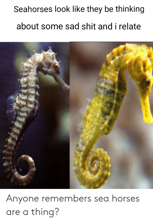 Horses: Anyone remembers sea horses are a thing?