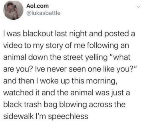 "last night: Aol.com  @lukasbattle  I was blackout last night and posted a  video to my story of me following an  animal down the street yelling ""what  are you? Ive never seen one like you?""  and then I woke up this morning,  watched it and the animal was just a  black trash bag blowing across the  sidewalk I'm speechless"