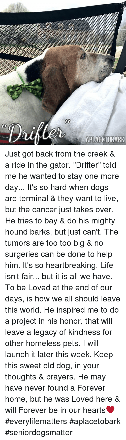 "Dogs, Memes, and 🤖: APLACETOBARK Just got back from the creek & a ride in the gator. ""Drifter"" told me he wanted to stay one more day...   It's so hard when dogs are terminal & they want to live, but the cancer just takes over.  He tries to bay & do his mighty hound barks, but just can't. The tumors are too too big & no surgeries can be done to help him. It's so heartbreaking. Life isn't fair... but it is all we have. To be Loved at the end of our days, is how we all should leave this world.  He inspired me to do a project in his honor, that will leave a legacy of kindness for other homeless pets. I will launch it later this week.   Keep this sweet old dog, in your thoughts & prayers.   He may have never found a Forever home, but he was Loved here & will Forever be in our hearts❤️  #everylifematters #aplacetobark #seniordogsmatter"