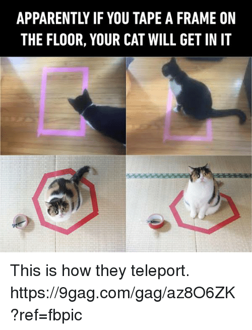 teleporter: APPARENTLY IF YOU TAPE A FRAME ON  THE FLOOR, YOUR CAT WILL GET IN IT This is how they teleport. https://9gag.com/gag/az8O6ZK?ref=fbpic