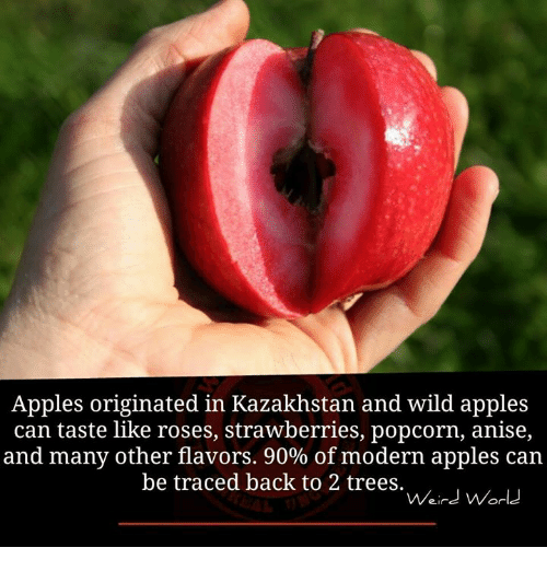 Appl: Apples originated in Kazakhstan and wild apples  can taste like roses, strawberries, popcorn, anise,  and many other flavors. 90% of modern apples can  be traced back to 2 trees.  Weird World