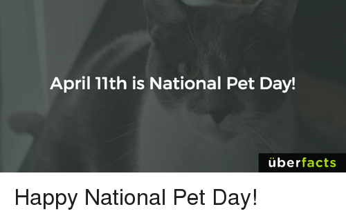 Uber Facts: April 11th is National Pet Day!  uber  facts Happy National Pet Day!