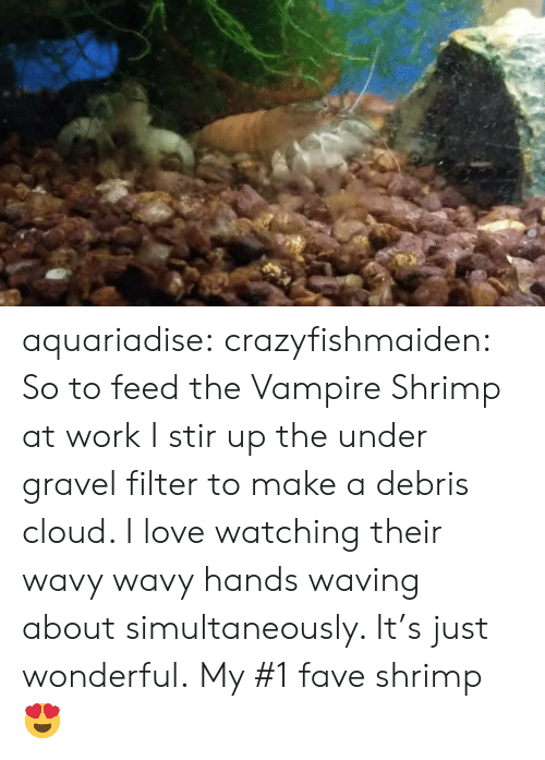 Graveling: aquariadise: crazyfishmaiden: So to feed the Vampire Shrimp at work I stir up the under gravel filter to make a debris cloud. I love watching their wavy wavy hands waving about simultaneously. It's just wonderful. My #1 fave shrimp 😍