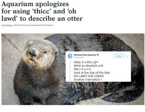 Aquarium, Girl, and Another: Aquarium apologizes  for using 'thicc' and 'oh  lawd' to describe an otter  Samra Sadegue 2018-12.20 1039 amI Last updated 2018-12-20 1044 am  Monterey Bay Aquarium  Follow  Montereysq  Abby is a thicc girl  What an absolute unit  She chon k  Look at the size of this lady  OH LAWD SHE COMIN  Another Internetism!