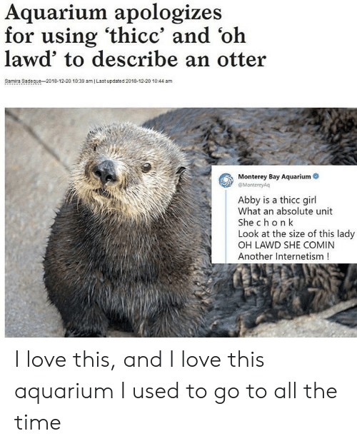 otter: Aquarium apologizes  for using 'thicc' and 'oh  lawd' to describe an otter  Samira Sadeque-2018-12-20 10:39 amI Last updated 2018-12-20 1044 am  Monterey Bay Aquarium  eMontereyAq  Abby is a thicc girl  What an absolute unit  She chon k  Look at the size of this lady  OH LAWD SHE COMIN  Another Internetism! I love this, and I love this aquarium I used to go to all the time