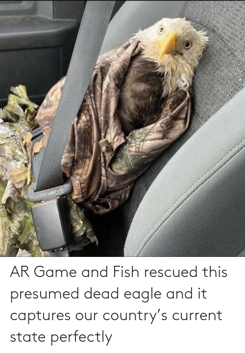 country: AR Game and Fish rescued this presumed dead eagle and it captures our country's current state perfectly