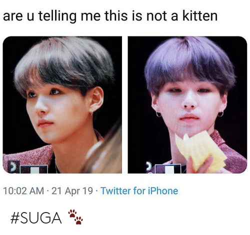Iphone, Twitter, and Apr: are u telling me this is not a kitten  10:02 AM 21 Apr 19 Twitter for iPhone #SUGA 🐾