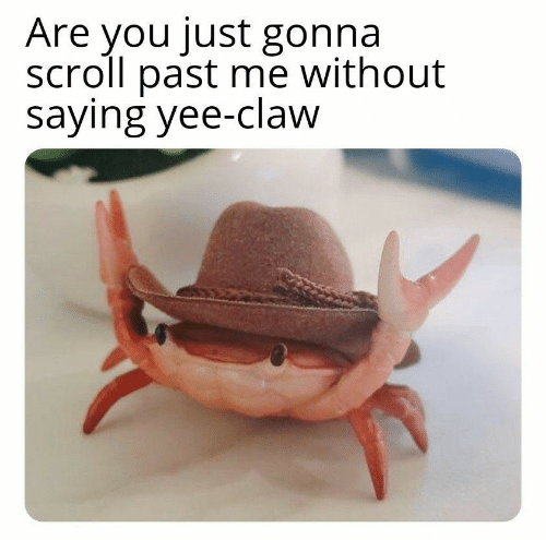 Yee, You, and Just: Are you just gonna  scroll past me without  saying yee-claw
