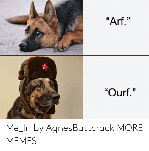 """arf: """"Arf.""""  """"Ourf."""" Me_Irl by AgnesButtcrack MORE MEMES"""