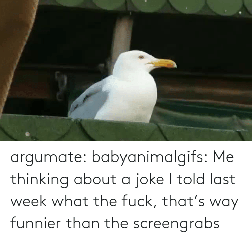 thinking: argumate: babyanimalgifs: Me thinking about a joke I told last week what the fuck, that's way funnier than the screengrabs