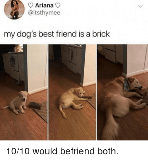 10 10 Would: Ariana  @itsthymee  0  my dog's best friend is a brick 10/10 would befriend both.