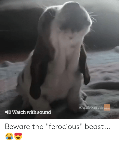 "Watch, Ferocious, and Beast: Armstrong via  storyful  Watch with sound Beware the ""ferocious"" beast... 😂😍"