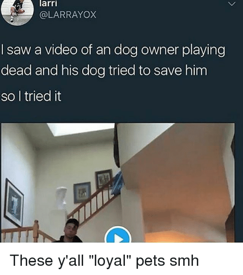 """Playing Dead: arri  @LARRAYOX  I saw a video of an dog owner playing  dead and his dog tried to save him  so l tried it These y'all """"loyal"""" pets smh"""