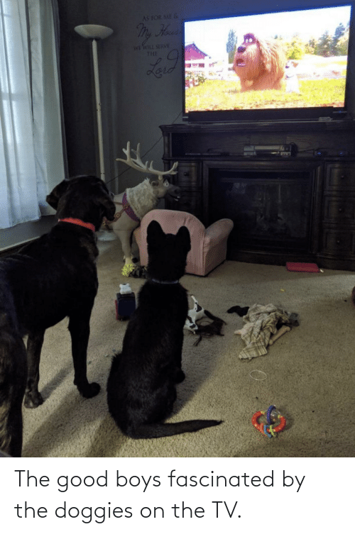 hous: AS FOR ME &  My Hous  FAS THM IM  THE  Laid The good boys fascinated by the doggies on the TV.