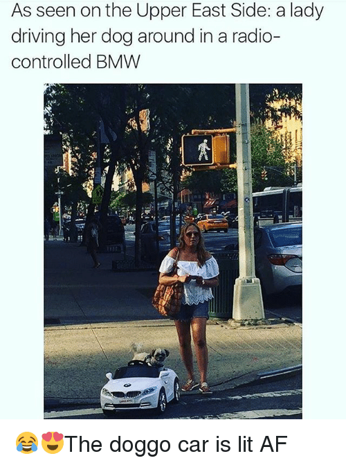 Carli: As seen on the Upper East Side: a lady  driving her dog around in a radio-  controlled BMW 😂😍The doggo car is lit AF