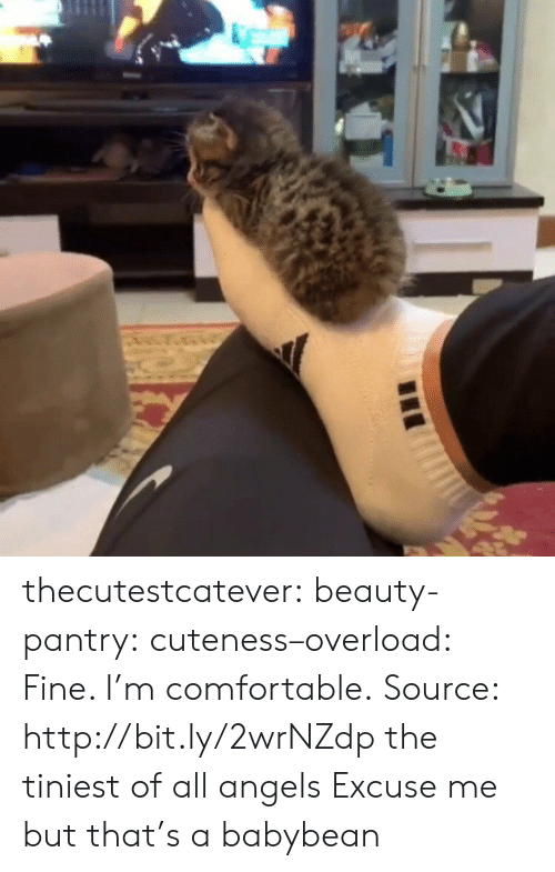 cuteness: AS thecutestcatever: beauty-pantry:   cuteness–overload:  Fine. I'm comfortable. Source: http://bit.ly/2wrNZdp  the tiniest of all angels   Excuse me but that's a babybean
