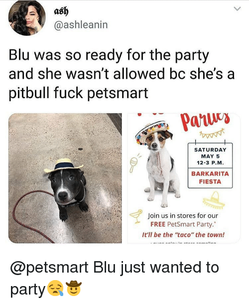 """Ash, Memes, and Party: ash  @ashleanin  Blu was so ready for the party  and she wasn't allowed bc she'sa  pitbull fuck petsmart  SATURDAY  MAY 5  12-3 P.M  BARKARITA  FIESTA  Join us in stores for our  FREE PetSmart Party.""""  It'll be the taco"""" the town! @petsmart Blu just wanted to party😪🤠"""