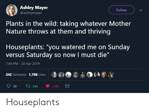 "Watered: Ashley Mayer  @ashleymayer  Follow  Plants in the wild: taking whatever Mother  Nature throws at them and thriving  Houseplants: ""you watered me on Sunday  versus Saturday so now I must die""  7:44 PM -28 Apr 2019  ş롤@O,ê  po®運  242 Retweets 1,708 Likes Houseplants"