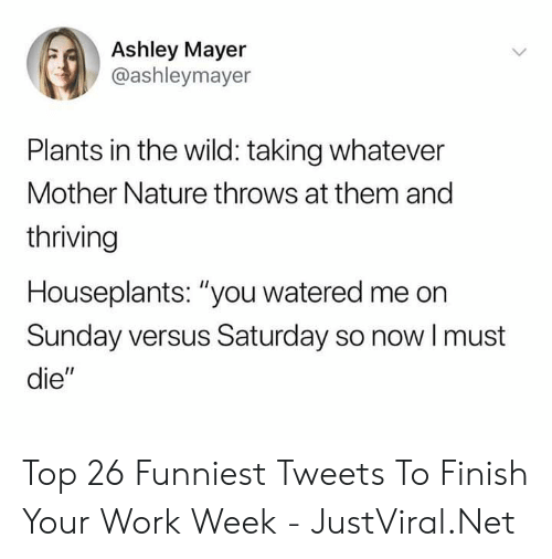 "Watered: Ashley Mayer  @ashleymayer  Plants in the wild: taking whatever  Mother Nature throws at them and  thriving  Houseplants: ""you watered me on  Sunday versus Saturday so nowI must  die"" Top 26 Funniest Tweets To Finish Your Work Week - JustViral.Net"