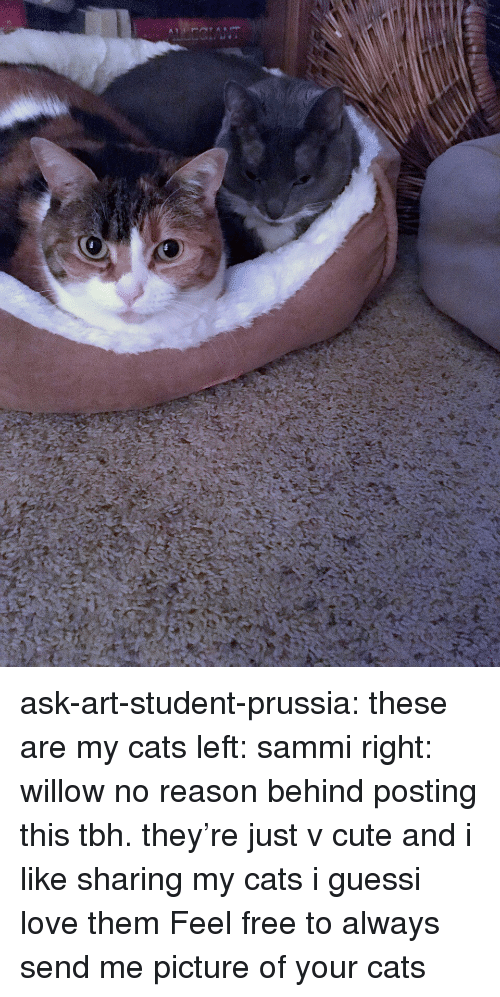 willow: ask-art-student-prussia:  these are my cats left: sammi right: willow no reason behind posting this tbh. they're just v cute and i like sharing my cats i guessi love them  Feel free to always send me picture of your cats