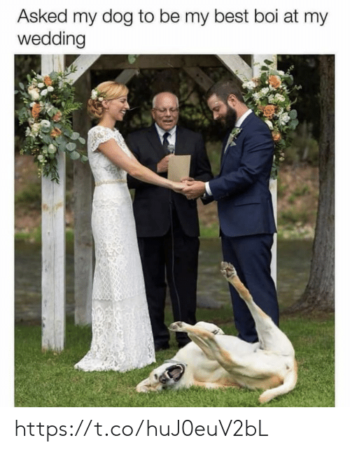 Memes, Best, and Wedding: Asked my dog to be my best boi at my  wedding https://t.co/huJ0euV2bL
