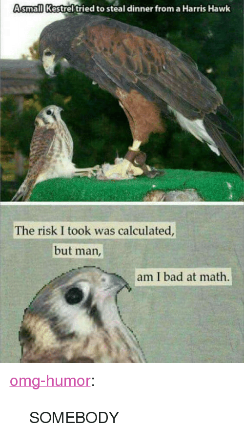 """But Man Am I Bad At Math: Asmall Kestrel tried to steal dinner from a Harris Hawk  The risk I took was calculated  but man  am I bad at math <p><a href=""""http://omg-humor.com/post/160496854497/somebody"""" class=""""tumblr_blog"""">omg-humor</a>:</p>  <blockquote><p>SOMEBODY</p></blockquote>"""