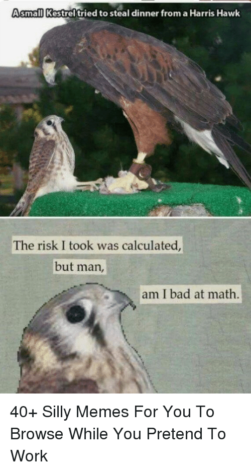 Bad At Math: Asmall Kestrel tried to steal dinner from a Harris Hawk  The risk I took was calculated  but man,  am I bad at math. 40+ Silly Memes For You To Browse While You Pretend To Work
