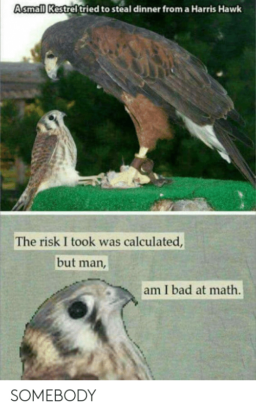 But Man Am I Bad At Math: Asmall Kestrel tried to steal dinner from a Harris Hawk  The risk I took was calculated  but man  am I bad at math SOMEBODY
