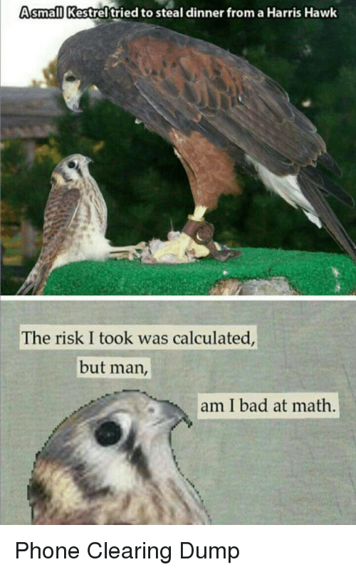 But Man Am I Bad At Math: Asmall Kestrel'tried to steal dinner from a Harris Hawk  The risk I took was calculated  but man,  am I bad at math Phone Clearing Dump
