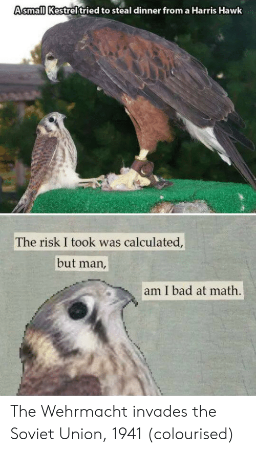 But Man Am I Bad At Math: Asmall Kestreltried to steal dinner from a Harris Hawk  The risk I took was calculated,  but man,  am I bad at math. The Wehrmacht invades the Soviet Union, 1941 (colourised)