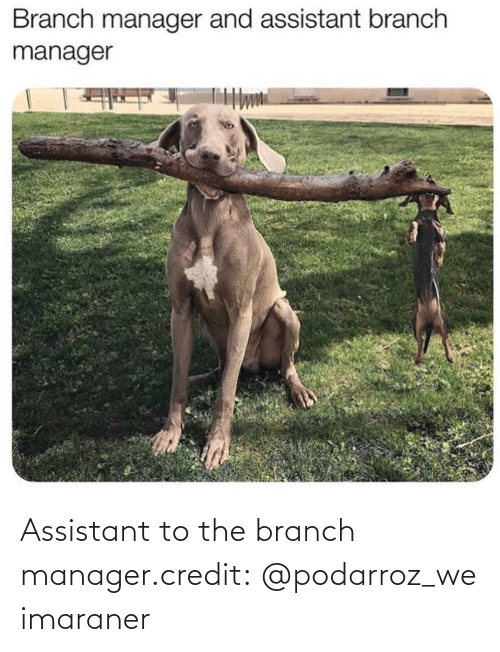 manager: Assistant to the branch manager.credit: @podarroz_weimaraner