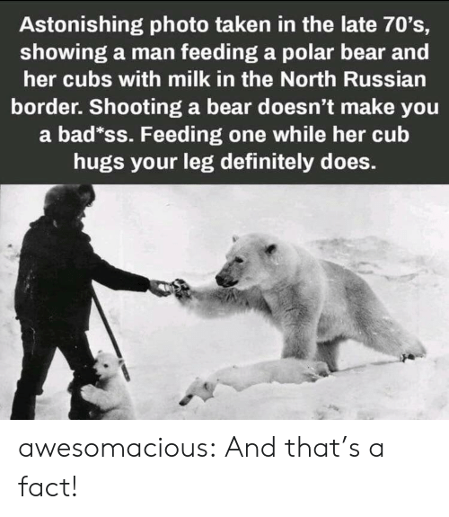 Border: Astonishing photo taken in the late 70's,  showing a man feeding a polar bear and  her cubs with milk in the North Russian  border. Shooting a bear doesn't make you  a bad*ss. Feeding one while her cub  hugs your leg definitely does. awesomacious:  And that's a fact!