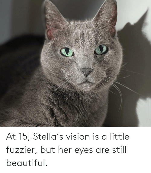 Vision: At 15, Stella's vision is a little fuzzier, but her eyes are still beautiful.